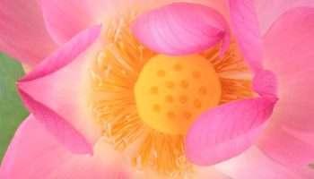 La coupe menstruelle est plus écologique